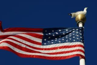 Zeemeeuw op vlaggenmast Gratis Foto
