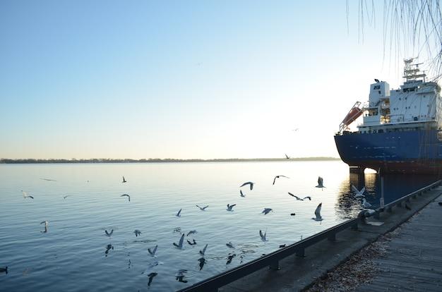 Zeemeeuwen bij de zonsondergang die door de havenbaai van toronto met een schip vliegen Premium Foto