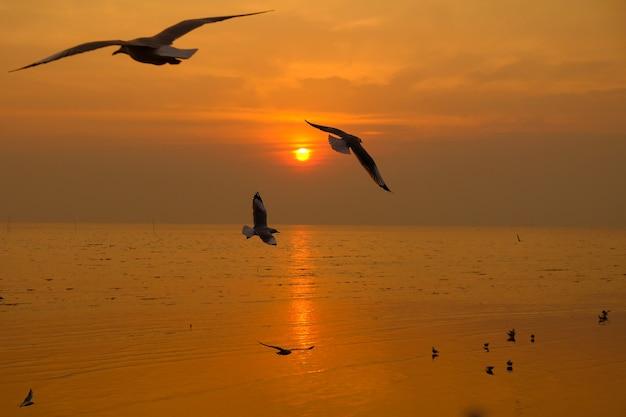 Zeemeeuwvlieg over de zonsondergangreis in thailand Premium Foto