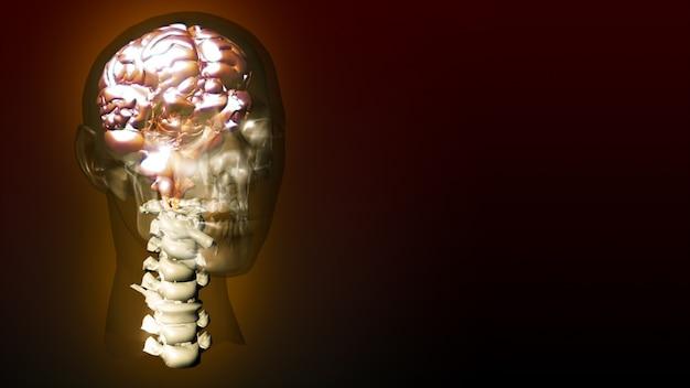 Zeer gedetailleerde animatie van een menselijk brein Premium Foto