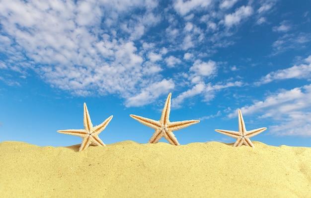 Zeeschelpen met zand als. zomerstrand Premium Foto