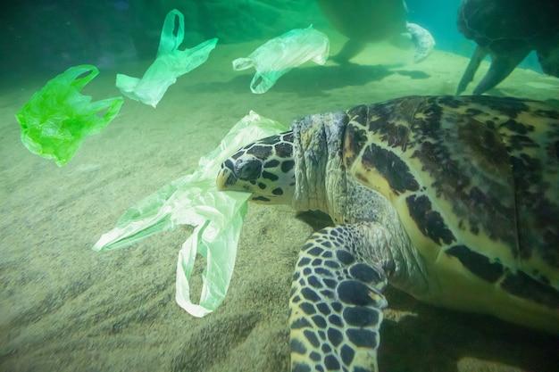 Zeeschildpad eet plastic zak oceaan vervuiling concept Premium Foto