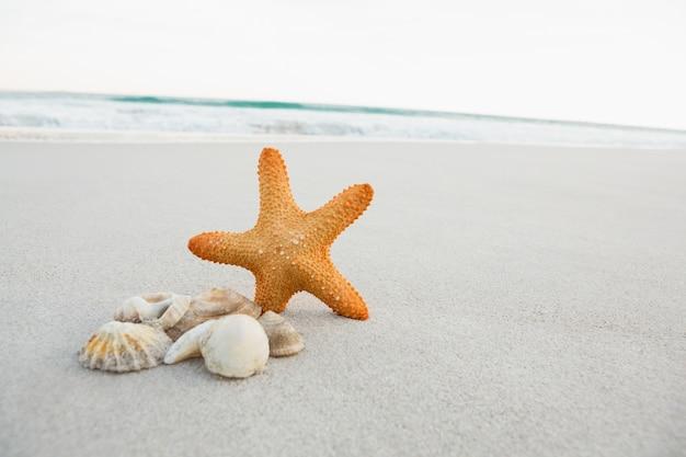 Zeester en shells op zand Gratis Foto