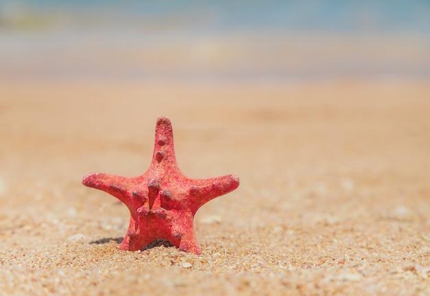 Zeester op het strand op het zand. selectieve aandacht. Premium Foto
