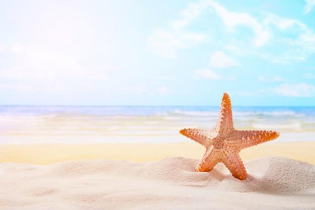 Zeester op zomer zonnig strand op oceaan achtergrond. reizen, vakantieconcepten. Gratis Foto