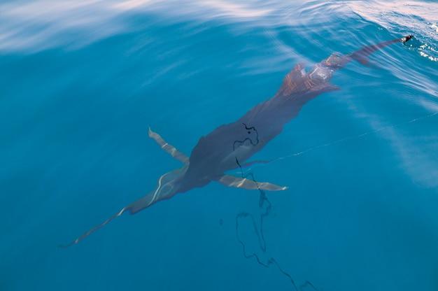 Zeilvis sportvissen in de buurt van de boot met vislijn Premium Foto