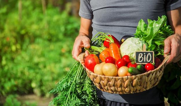 Zelfgemaakte groenten in de handen van mannen. oogst. selectieve aandacht. Premium Foto