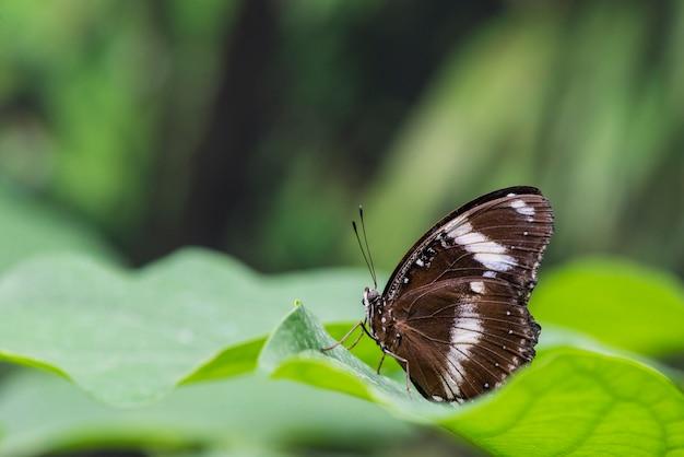 Zijaanzicht bruine vlinder op bladeren Gratis Foto