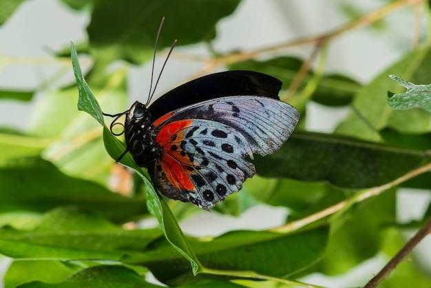 Zijaanzicht delicate vlinder in de natuur Gratis Foto
