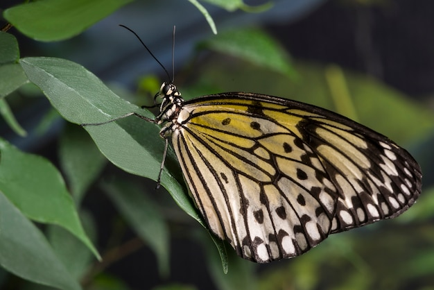 Zijaanzicht gele vlinder op blad Gratis Foto