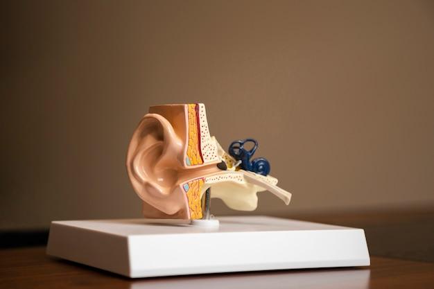 Zijaanzicht oorstructuur op een platform Gratis Foto