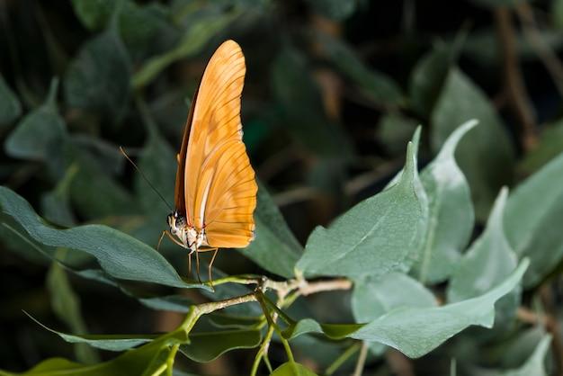 Zijaanzicht oranje vlinder op blad Gratis Foto