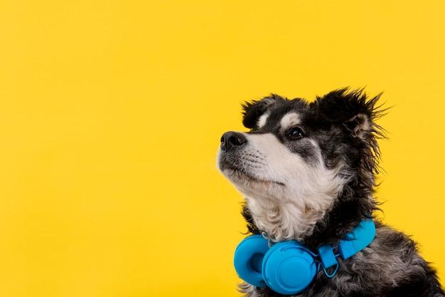 Zijaanzicht schattige hond met koptelefoon Premium Foto