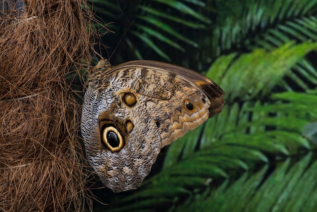 Zijaanzicht uil vlinder op palmboomstam Gratis Foto