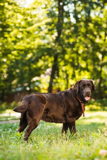 Zijaanzicht van een schattige hond in park Gratis Foto