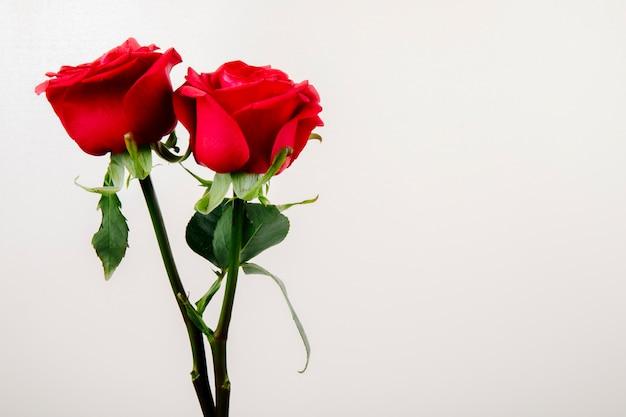 Zijaanzicht van rode kleurenrozen die op witte achtergrond met exemplaarruimte worden geïsoleerd Gratis Foto