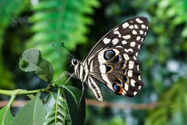 Zijaanzichtvlinder met onscherpe achtergrond Gratis Foto