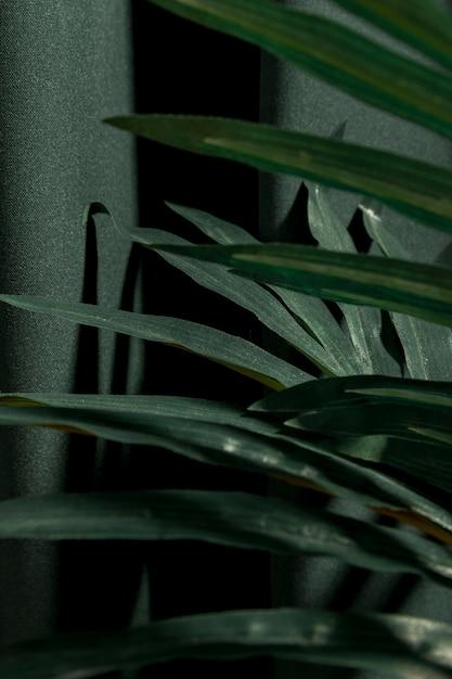 Zijdelings dichte omhoog palmbladeren Gratis Foto