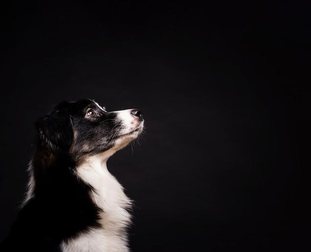 Zijdelings schattige hond staan Gratis Foto