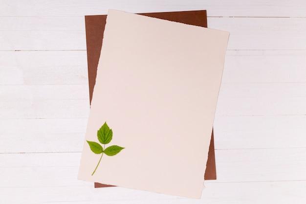 Zilverberk kleine bladeren op exemplaarruimteoppervlak Gratis Foto