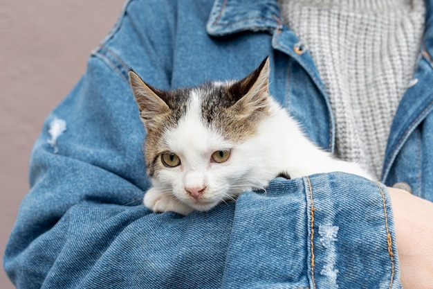 Zitting van de close-up de leuke binnenlandse kat in eigenaarwapens Gratis Foto