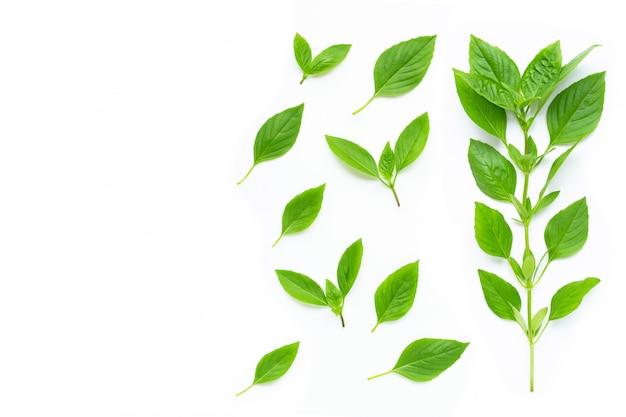 Zoete basilicumbladeren op wit Premium Foto