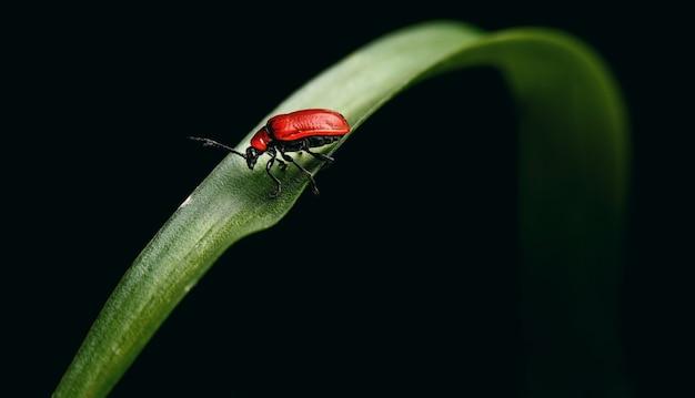 Zomer rood lieveheersbeestje Premium Foto