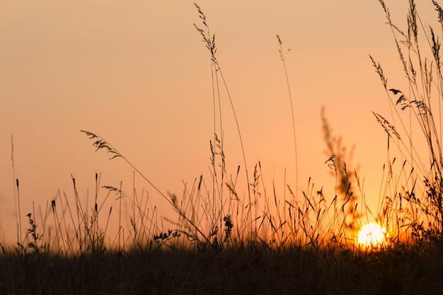Zomer zonsondergang op weide. Premium Foto