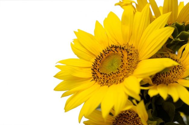 Zonnebloem bloemengrens met feestelijke exemplaarruimte. Premium Foto