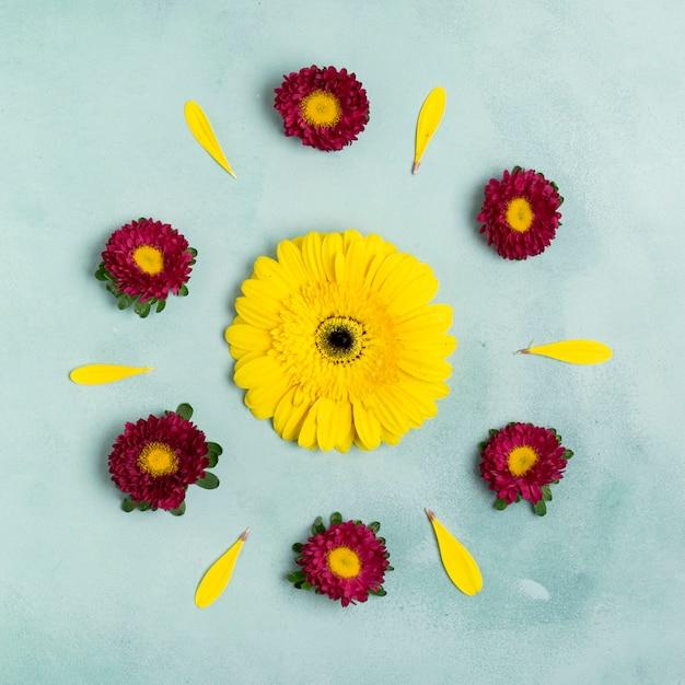 Zonnebloem en madeliefjes schattig arrangement bovenaanzicht Gratis Foto