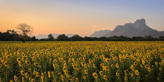 Zonnebloemgebied over blauwe hemel Premium Foto