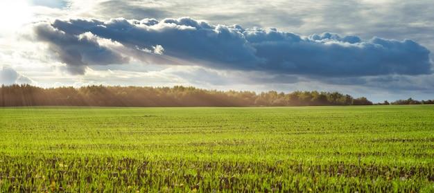 Zonnestralen verlichten een groen veld Premium Foto