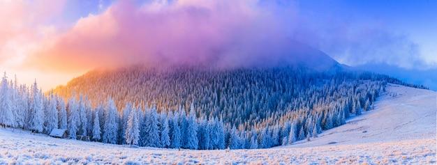 Zonnig winterlandschap Premium Foto
