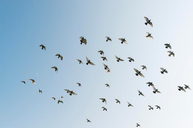 Zonnige dag vliegende vogels Gratis Foto