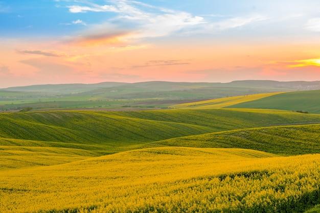 Zonsondergang over bloeiende koolzaadvelden Premium Foto