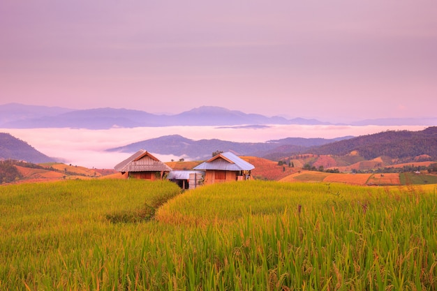 Zonsopgang in terrasvormig paddy field in mae-jam-dorp, chiang mai province, thailand Premium Foto