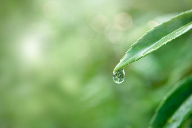 Zuiver water in de natuur Gratis Foto