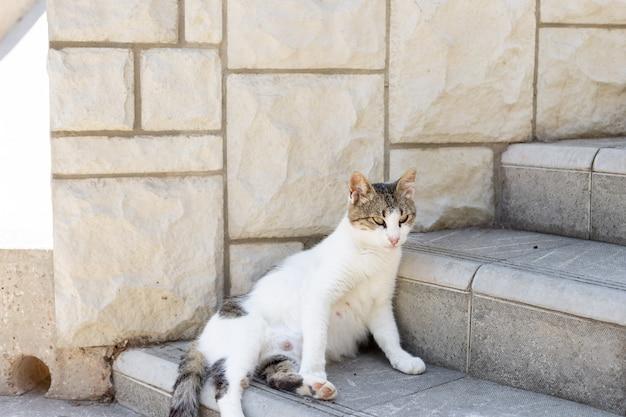 Zwangere kat, zittend op de straat Premium Foto
