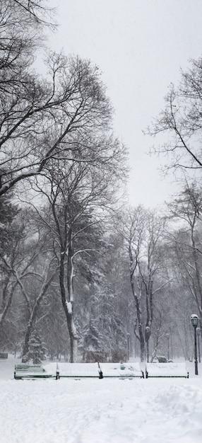 Zware sneeuwstorm in het park. verticaal panorama gemaakt van 5 afbeeldingen. Premium Foto