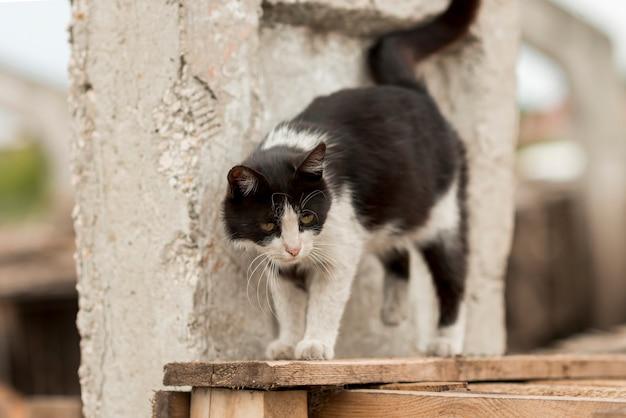 Zwart-witte kat die in een landbouwer loopt Gratis Foto