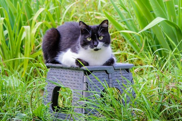 Zwart-witte kat in de tuin onder het gras | Premium Foto