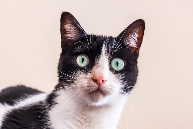 Zwart-witte kat met grote groene ogen kijkt recht in de camera. Premium Foto