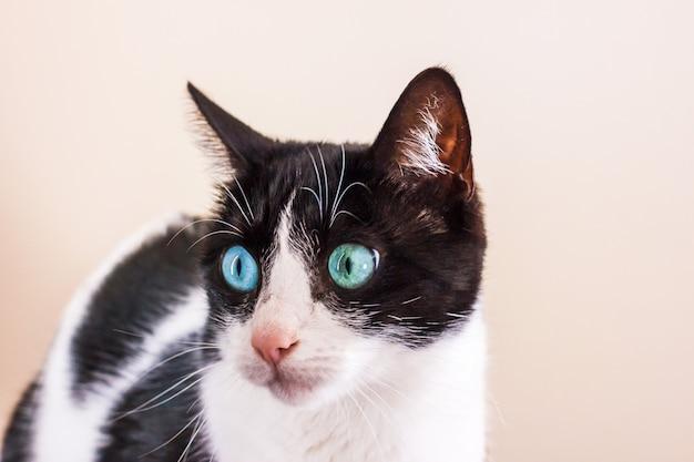 Zwart-witte kat met grote groene ogen kijkt weg. Premium Foto