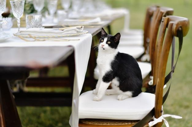 Zwart-witte kat zit aan gedecoreerde bruiloft tafel op de chiavari stoel Gratis Foto