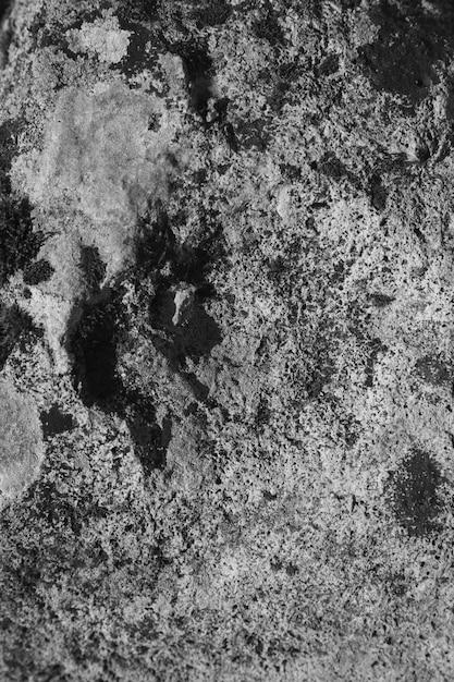 Zwart-witte paddestoel en korstmos op rots Gratis Foto