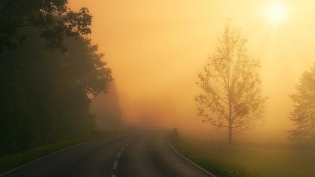 Zwarte asfaltweg tussen groene bomen tijdens zonsondergang Gratis Foto