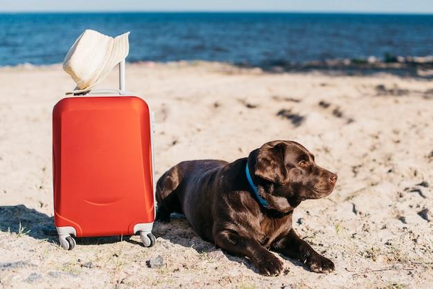 Zwarte hond plezier op het strand Gratis Foto