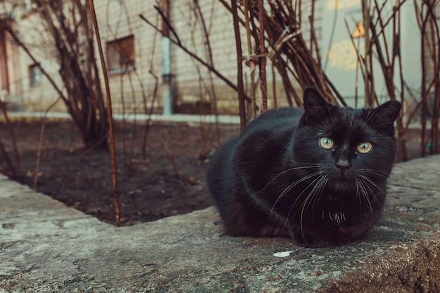 Zwarte kat zit buiten naast een gebouw en bomen Gratis Foto