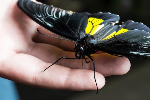 Zwarte vlinder die bij de hand staat Gratis Foto