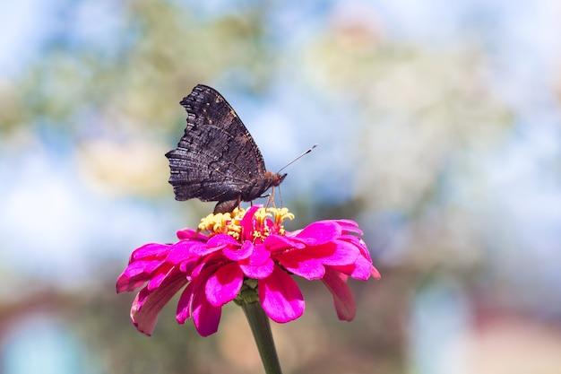 Zwarte vlinder zittend op een roze bloem Premium Foto